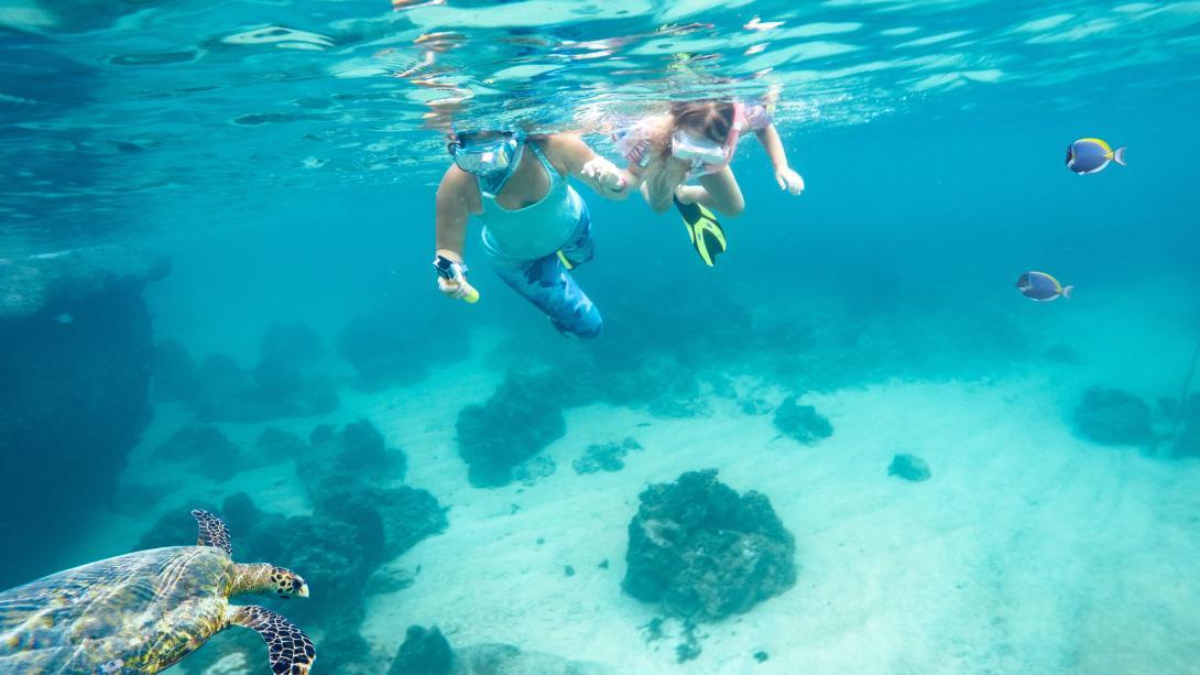 Viajeros ayudando en monitoreo de vida marina.